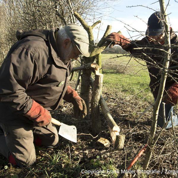 15e NK Maasheggenvlechten op zondag 8 maart