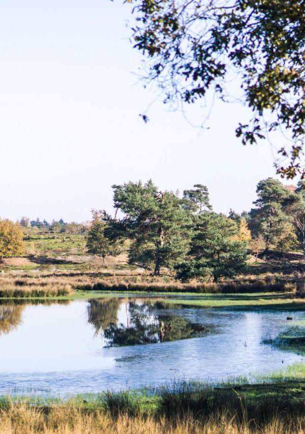 Nationaal Park De Maasduinen 1