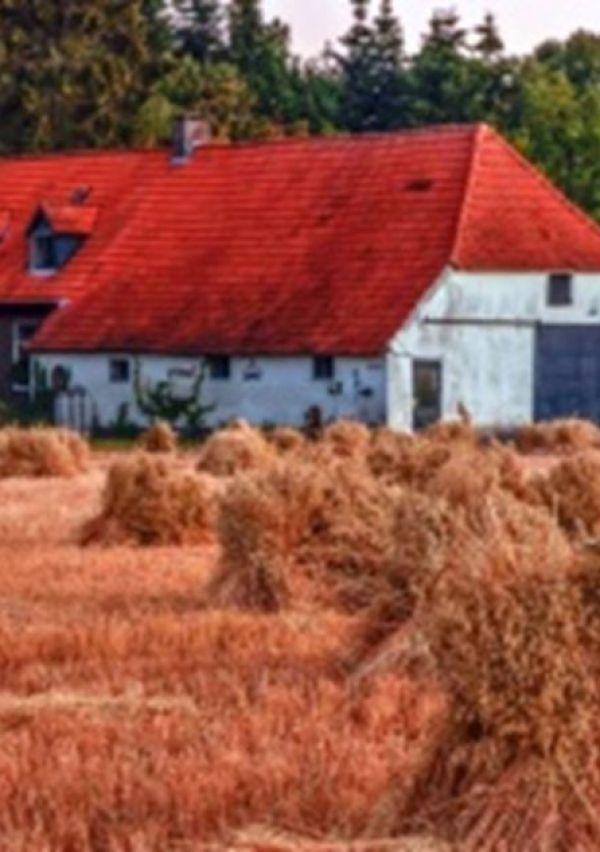 Een Erfgoedzadenproject op het landgoed Bleijenbeek 1