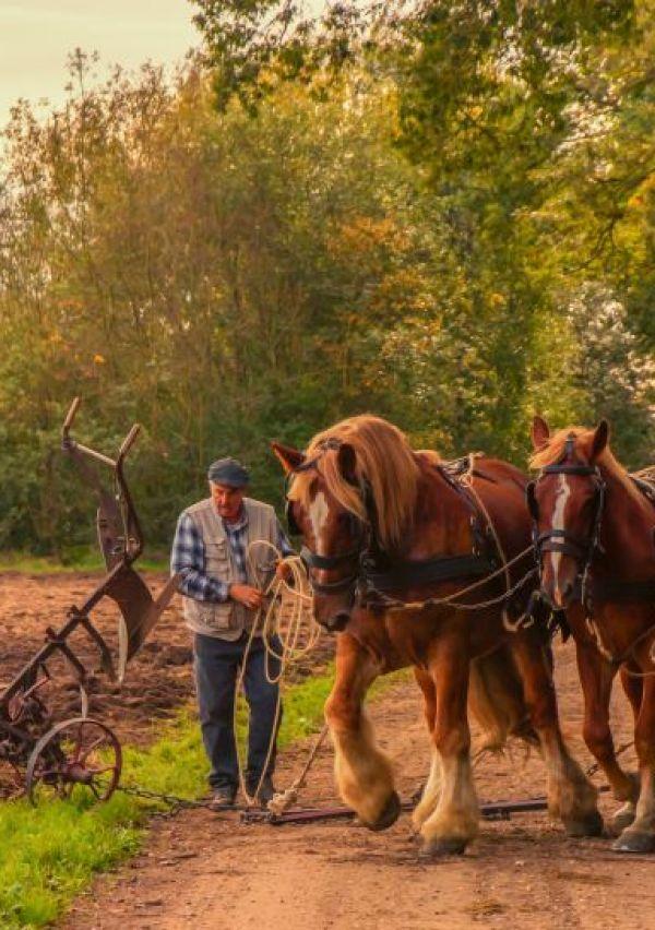 Een Erfgoedzadenproject op het landgoed Bleijenbeek