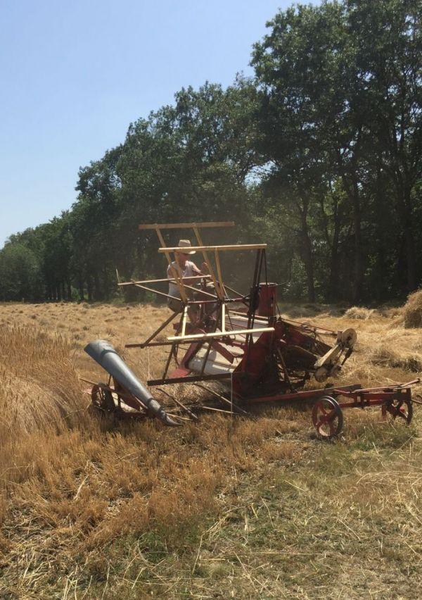 Een Erfgoedzadenproject op het landgoed Bleijenbeek 2