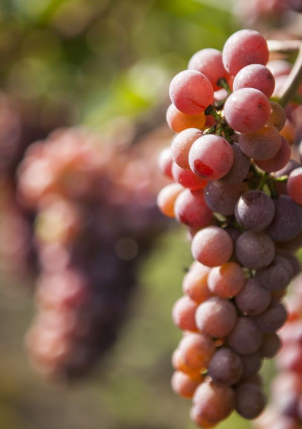 Wijnhoeve de Heikant, vakantiegevoel om de hoek 4