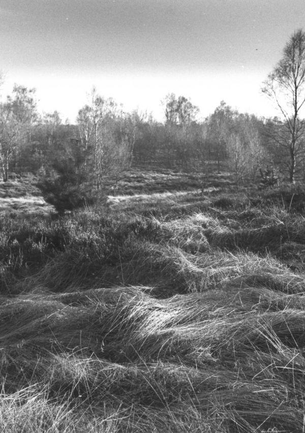 NP De Maasduinen: Landgoed de Hamert 1