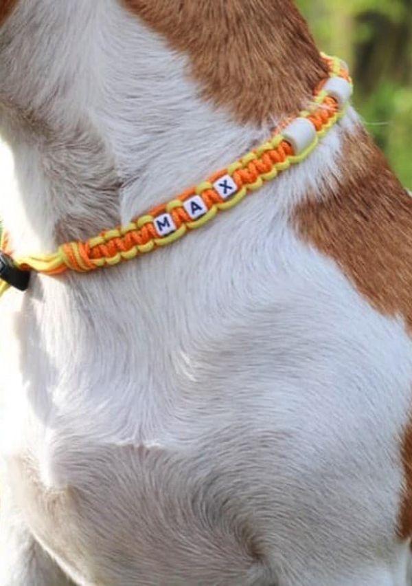 De mooiste anti-teken/vlooien banden en halsbanden voor jouw hond! 3